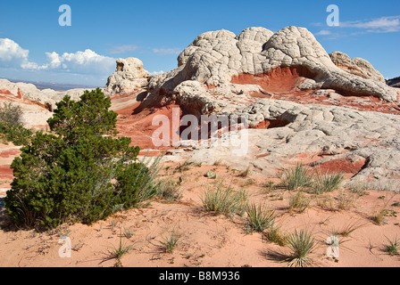 USA, Arizona, Vermilion Cliffs National Monument. Formations de grès rouge et blanc à blanc poche. Banque D'Images