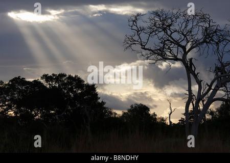 Arbres silhouette sur un ciel nuageux avec les rayons de soleil à travers Banque D'Images