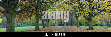 Chemin bordé d'arbres en automne Cambridgeshire UK Banque D'Images