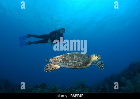 Une tortue se déplace sur les récifs à Grand Cayman, surveillée par un plongeur. Banque D'Images
