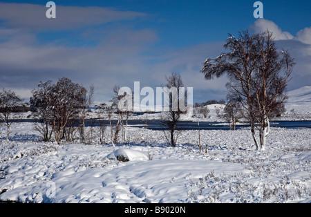 Bordée d'arbres paysage couvert de neige, Rannoch Moor, à l'Est, les Highlands écossais, Écosse, Royaume-Uni, Europe