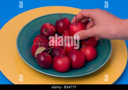 Prise d'une main ripe apple crabe d'un bol de pommes de crabe Banque D'Images