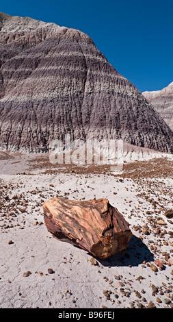 Un morceau de bois pétrifié le long du sentier Blue Mesa colorés dans les badlands de Petrified Forest National Banque D'Images
