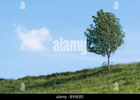 Tree on rural hillside Banque D'Images