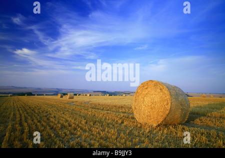 Une botte de paille dans un champ de chaumes après la récolte avec ciel bleu et nuages d'été Banque D'Images