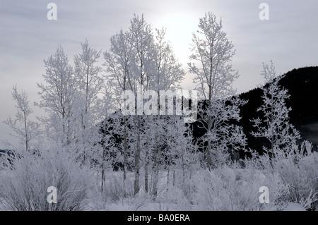 Les arbres couverts de givre en contre-jour sur un matin froid à Oxbow Bend sur la rivière Snake contre signal mountain, au Wyoming, USA