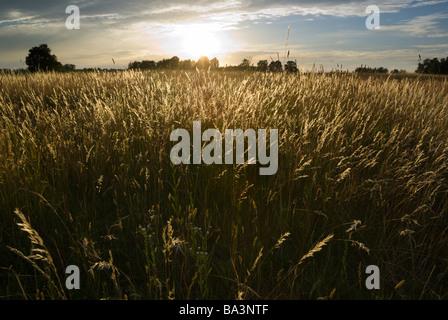 Soleil sur les herbes folles aRGB Banque D'Images