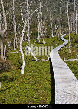 Vue sur colline avec des arbres de boardwalk Cradle Mountain Valley partie du lac Sainte Claire Tasmanie Australie Banque D'Images