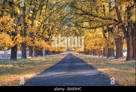 Grande image d'une route bordée d'arbres en automne Banque D'Images