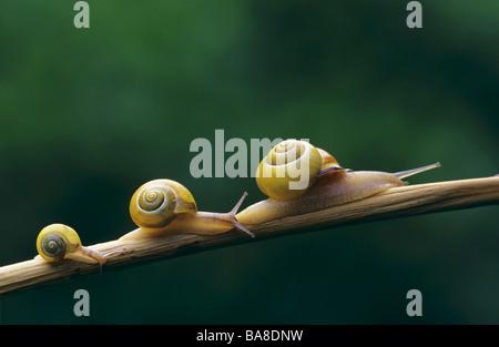 Trois escargots sur branch