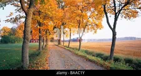 Des feuilles sèches sur route Banque D'Images