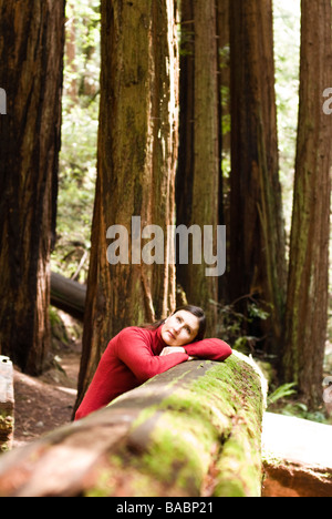 Sequoia Forest en Californie Banque D'Images