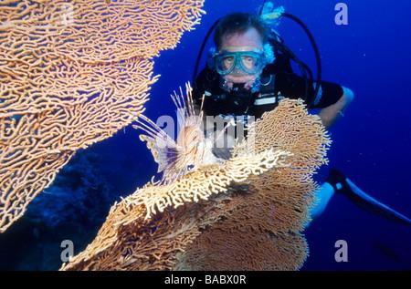 L'Egypte, Mer Rouge, en mer ou poisson lion gorgones ventilateur Banque D'Images