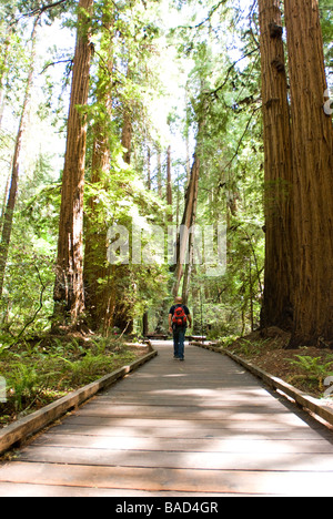 Sequoia Forest en Californie
