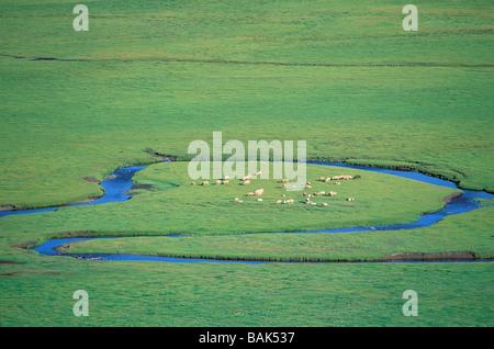 La Mongolie, province Arkhangai, Snake Valley, troupeau de moutons Banque D'Images