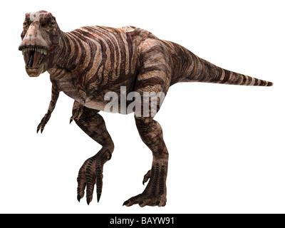 """Tyrannosaurus rex (qui signifie """"lézard tyran roi') T-Rex vivait dans l'ouest de l'Amérique du Nord 68 à 65 millions d'années"""