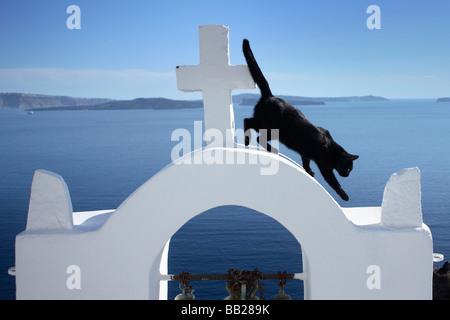 Chat domestique (Felis silvestris, Felis catus). Chat noir sur le clocher de l'église à Oia