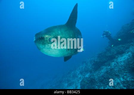 L Indonesie De La Province De Bali Nusa Penida Ocean Adultes