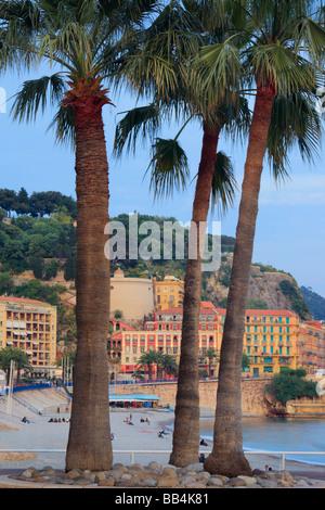 Palmiers sur la Promenade des Anglais à Nice, France sur la côte d'Azur Banque D'Images