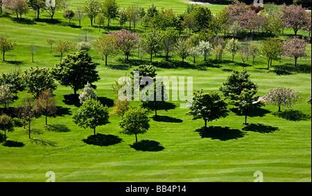 Photographié d'arbres distance au soleil casting shadows sur l'herbe bien verte, au début du printemps Banque D'Images