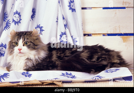 American Curl - chat couché sur un tissu