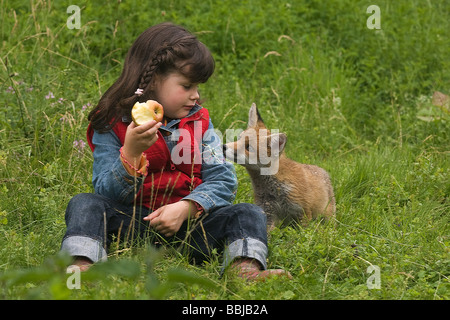 Jeune fille regardant red fox Banque D'Images