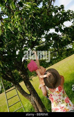 Enfant de 3 ans assis sur les épaules des mères ramasser les cerises d'un arbre. Banque D'Images
