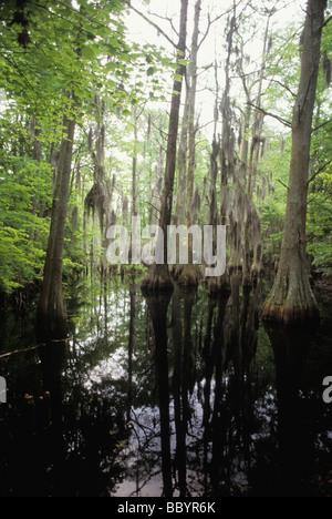 Marais de First Landing State Park Chesapeake Bay, près de l'endroit où le capitaine John Smith débarque en 1607 Banque D'Images