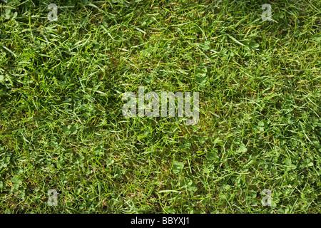 Une section de pelouse, vue du dessus