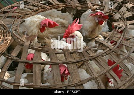 Des poulets dans un panier à un marché rural, Orissa, Inde Banque D'Images