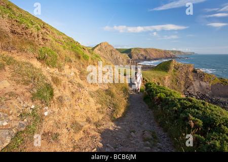 Dans l'homme d'âge moyen 50 ans marchant à Hartland Quay sur le sentier du littoral de la bouche de Speke Patrimoine Banque D'Images