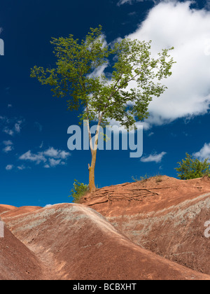 Seul arbre vert croissant sur une colline escarpée dans Badlands Banque D'Images