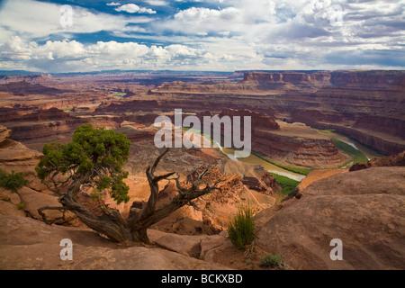 Vue de Dead Horse Point dans la région de Dead Horse State Park à la recherche en île dans le district de ciel Canyonlands Banque D'Images