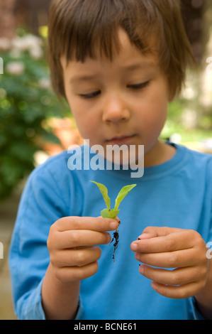 Un garçon de six ans, est titulaire d'un semis de laitue dans le jardin, England, UK Banque D'Images