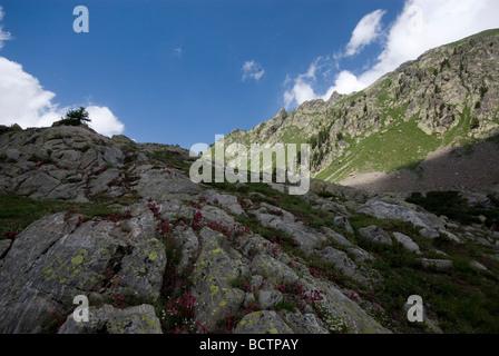 Le Parc National du Mercantour, Alpes du Sud, France - près du Lac de Trecolpas. Banque D'Images