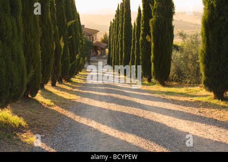Italie, Toscane, San Quirico d'Orcia, route de campagne bordée de cyprès conduit à une villa Banque D'Images