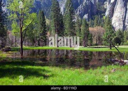 Pré Vert à Yosemite National Park, Californie. Banque D'Images