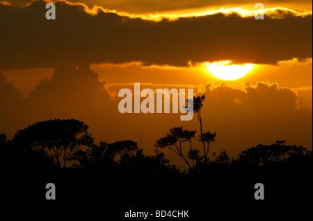 Coucher du soleil à parc national de Soberania, République du Panama. Banque D'Images