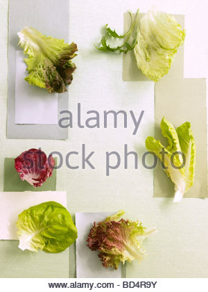 Différents types de feuilles de salade Banque D'Images
