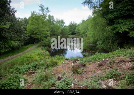Étang dans Rivington, jardins en terrasses Lancashire UK Banque D'Images