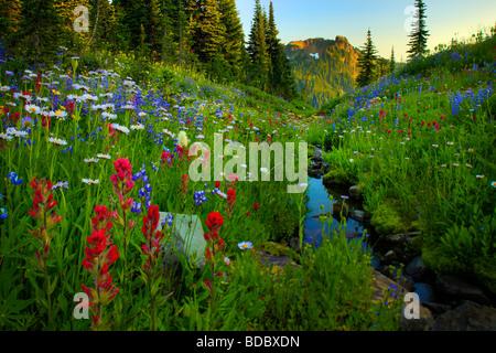 Doublure de fleurs sauvages le long du ruisseau un sentier de Crête Naches dans Mount Rainier National Park