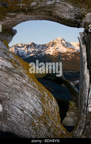 Mt. Alice vue à travers la forêt nationale de Chugach, bois flotté, Seward, Alaska.