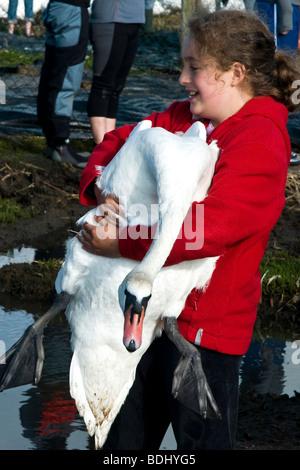 Young Girl holding a swan hors de l'eau à l'Abbotsbury Swannery dans le Dorset, Angleterre du Sud-Ouest Banque D'Images