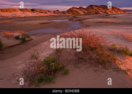 Feux de soleil baigne l'Oceano Dunes à Pismo State Beach, Californie, USA. Banque D'Images