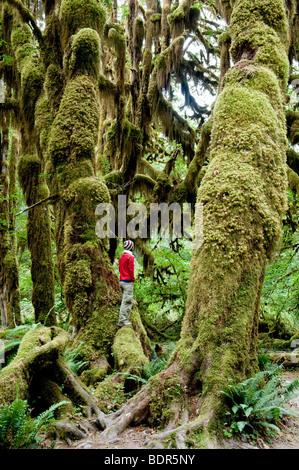 Hall de mousses trail, Hoh Rain Forest, Olympic National Park, Washington, USA Banque D'Images