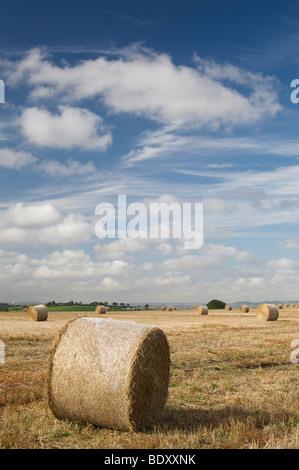Bottes de paille dans un champ au moment de la récolte dans la campagne anglaise Banque D'Images