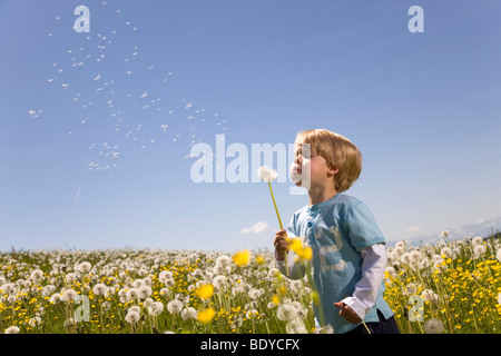 Boy blowing dandelion seeds Banque D'Images