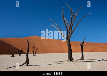 Dead Vlei dans le Namib-nuakluft désert près de Sossusvlei en Namibie Banque D'Images