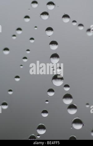 Gouttes d'eau, rosée sur spider's web Banque D'Images