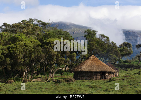 Cabane dans la forêt Harenna, Bale Mountains National Park, Ethiopie Banque D'Images